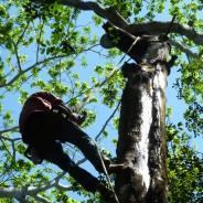 Peru Balsam Process